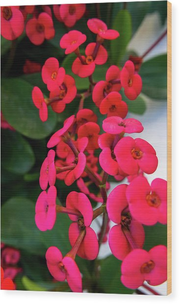 Red Flowers In Bloom Wood Print