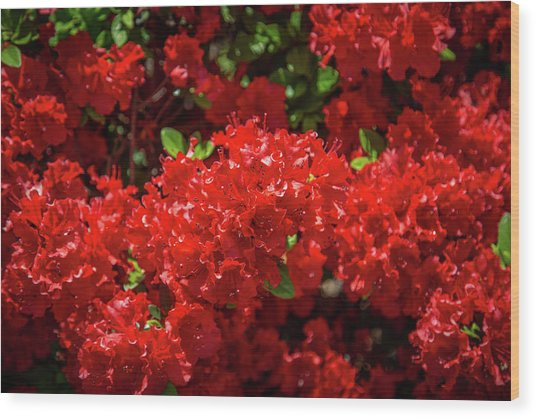 Red Flowers Wood Print