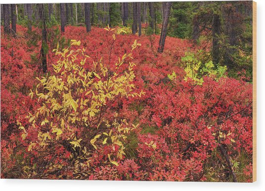 Red Forest Panoramic Wood Print by Leland D Howard