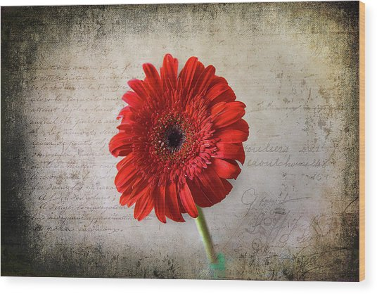 Wood Print featuring the photograph Red Gerbera by Milena Ilieva