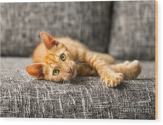 Red Kitten Lying On Bed And Looking At Wood Print