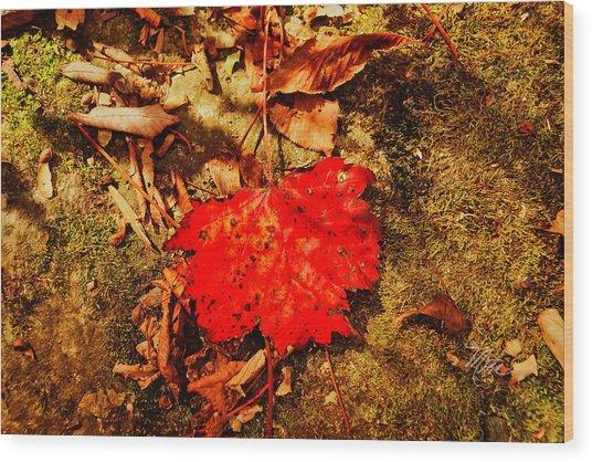 Red Leaf On Mossy Rock Wood Print