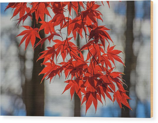 Wood Print featuring the photograph Red Leaves by Cindy Lark Hartman