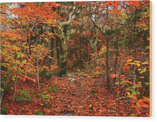 Wood Print featuring the photograph Red Oaks And At Blaze Horizontal by Raymond Salani III