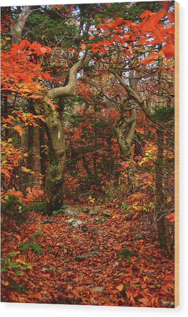 Wood Print featuring the photograph Red Oaks And At Blaze Vertical by Raymond Salani III