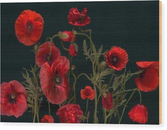 Red Poppies On Black Wood Print