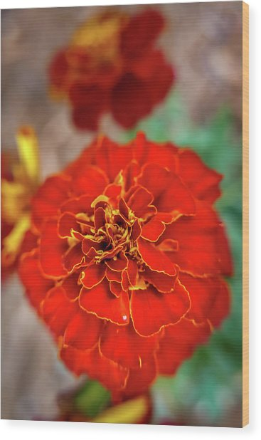 Red Summer Flowers Wood Print