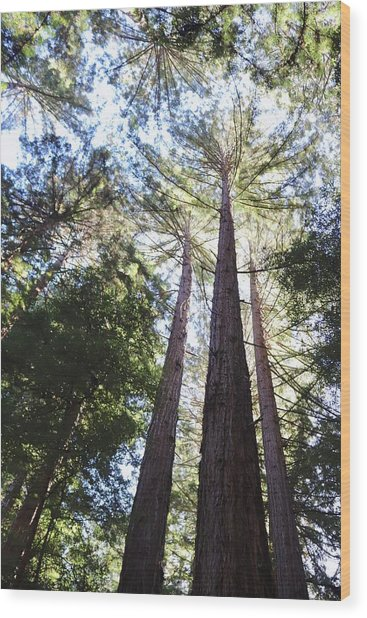 Redwoods, Blue Sky Wood Print