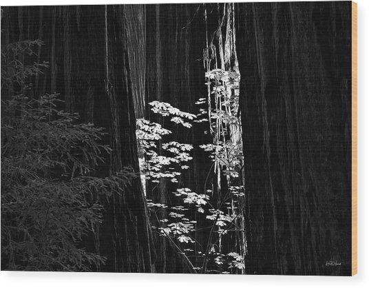 Redwoods Light And Texture Wood Print by Leland D Howard
