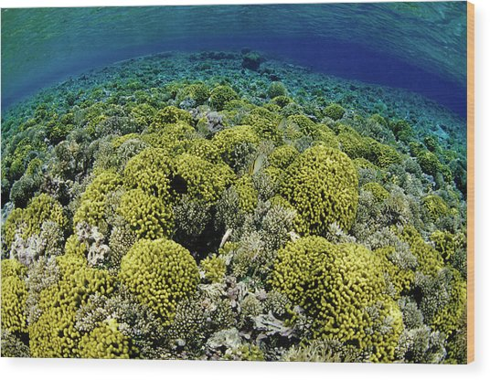 Reef Garden Wood Print
