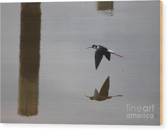 Reflection Of The Salton Sea Black Neck Stilt Flying Wood Print