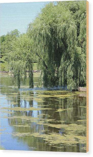 Reflections From Mother Willow Wood Print