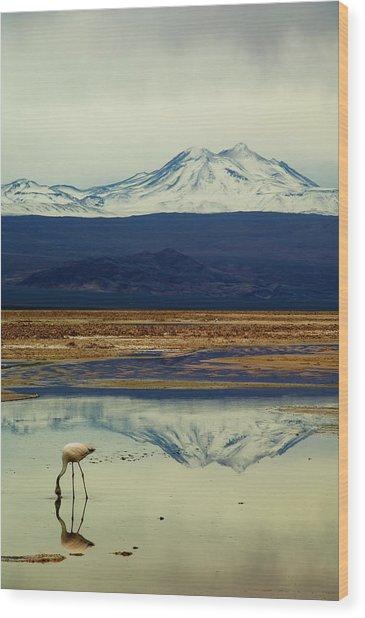 Reflections, Salar De Atacama, Chile Wood Print