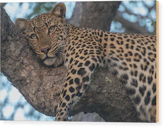 Relaxed Leopard Wood Print