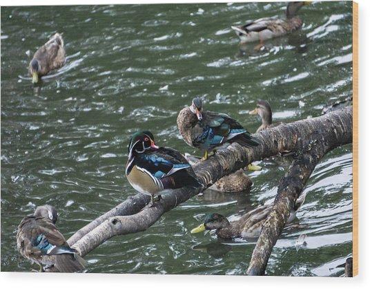 Resting Ducks Wood Print