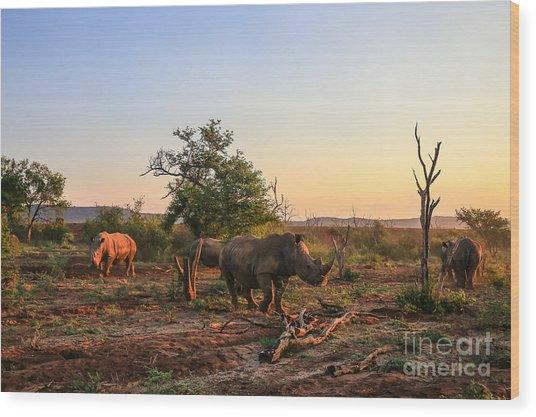 Rhino Herd Moving Around At Sunset Wood Print