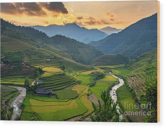 Rice Field On Terraces Panoramic Wood Print