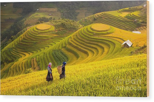 Rice Fields On Terraced Of Mu Cang Wood Print