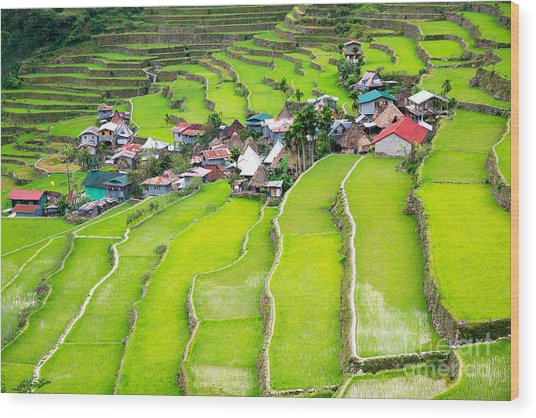 Rice Terraces In The Philippines. The Wood Print