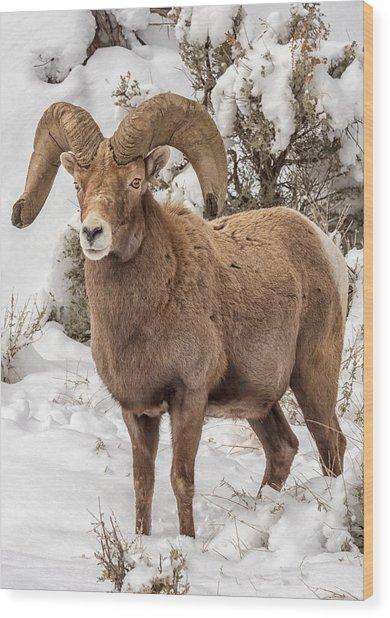 Rio Grande Bighorn Wood Print