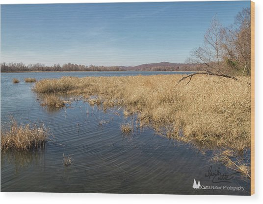 River Grass Wood Print