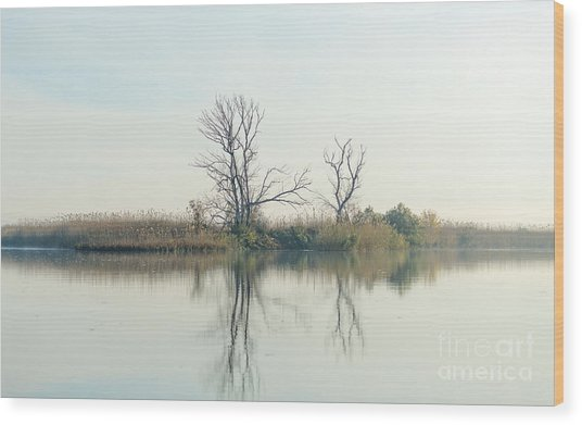 River With Tree Reflected In The Delta Wood Print