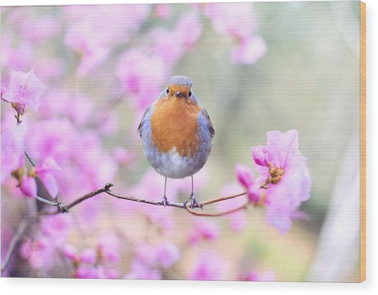 Robin On Pink Flowers Wood Print