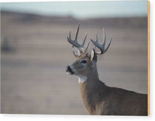 Rocky Mountain Deer Wood Print