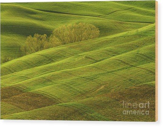 Rolling Grassy Landscape Tuscany-1 Wood Print