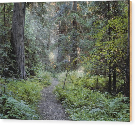 Roosevelt Grove Wood Print by Leland D Howard