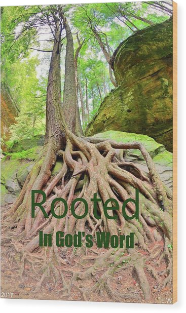 Rooted In God's Word Wood Print