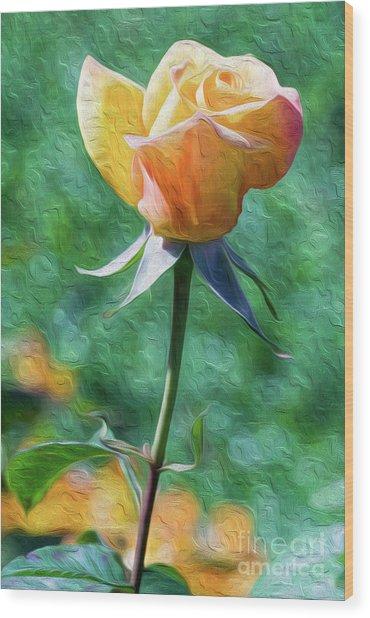 Rose Prominence II Wood Print