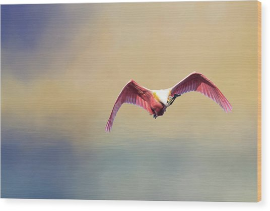 Roseate Spoonbill At Sunrise Wood Print