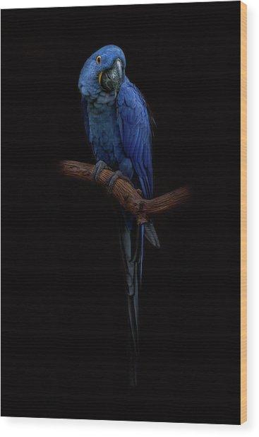 Royal Blue Beauty  Wood Print