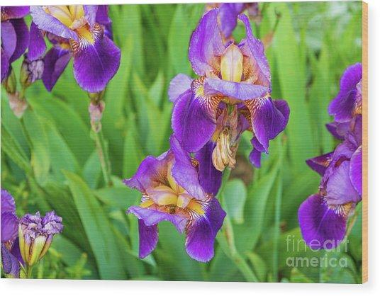 Royal Purple Irise Wood Print