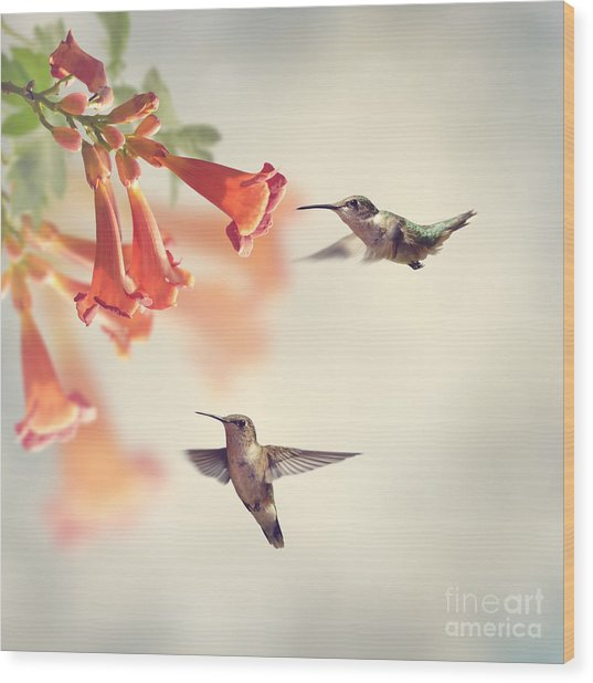 Ruby Throated Hummingbirds Hover Over Wood Print