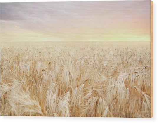 Rye Field Wood Print by Nadyaphoto
