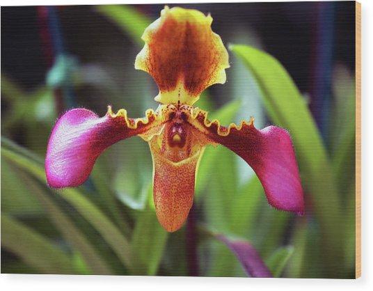Sad Orchid Wood Print