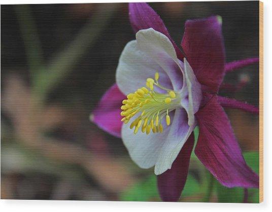 Saffron Stamens I Wood Print