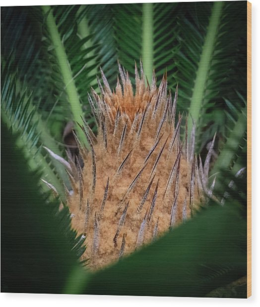 Sago Palm Wood Print