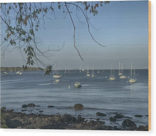 Sailboats In Rockland Harbor Wood Print