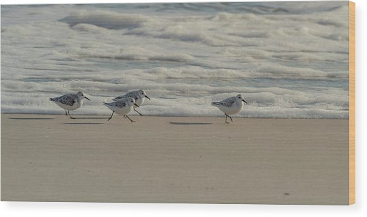 Wood Print featuring the photograph Sanderlings At Assateague Island National Seashore I 1x2 by William Dickman