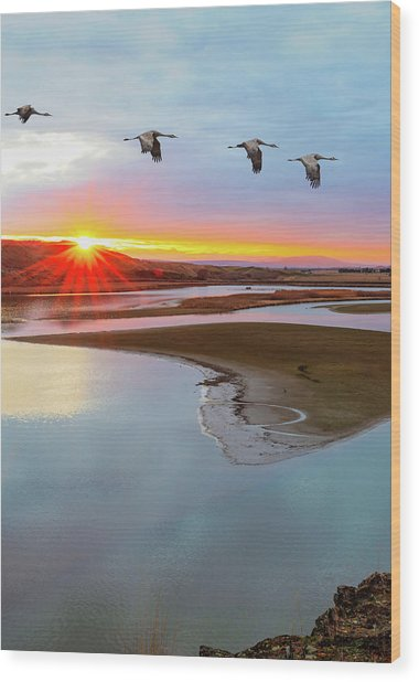 Sandhill Cranes At Scooteney Reservoir Wa Wood Print