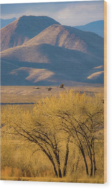 Sandhill Cranes Near The Bosque Wood Print