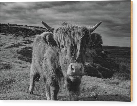 Saying Hello To A Highland Cow At Baslow Edge Black And White Wood Print