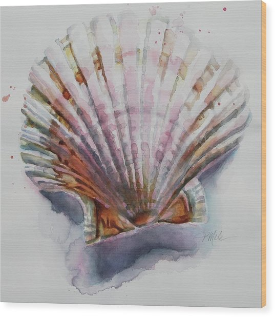 Scallop Seashell Wood Print