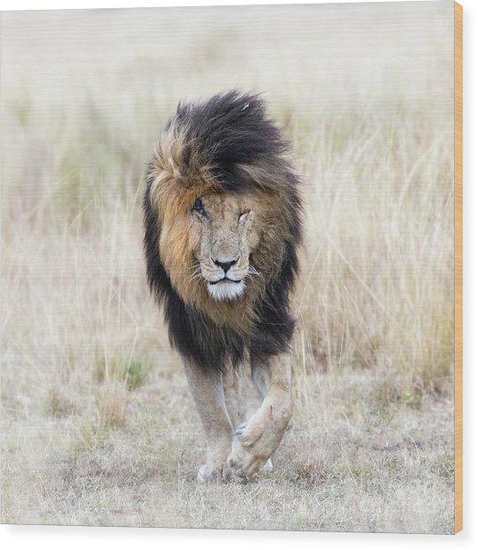 Scar The Lion Wood Print