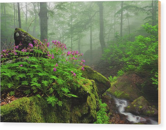 Scent Of Spring Wood Print