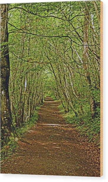 Scotland. Killiecrankie. Path Through The Trees. Wood Print