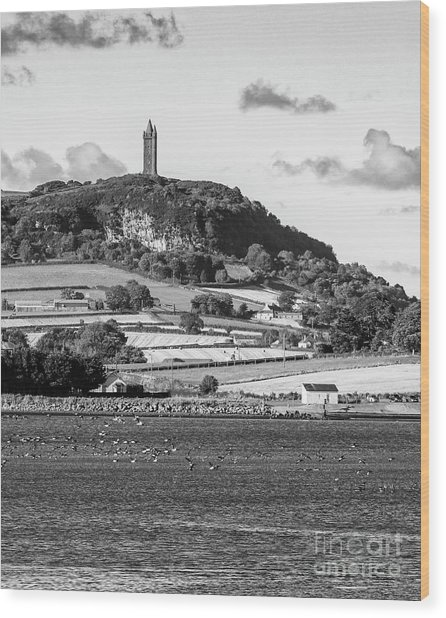 Scrabo Tower Wood Print